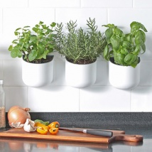Eden Suction Herb/Plant Pot | White