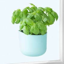 Eden Suction Herb/Plant Pot | Blue